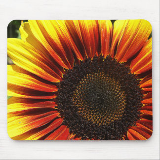 Vivid Sunflower Closeup Mouse Pads