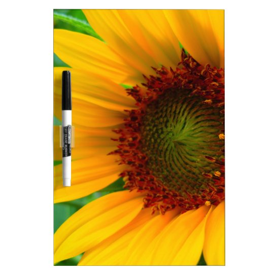 VIVID SUNFLOWER II DRY ERASE BOARD