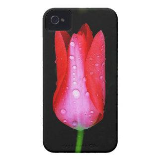 Vivid Tulip iPhone 4/4S Case iPhone 4 Cases