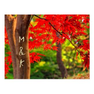 Vivid Vermillion Maple Leaves Autumn Red Fall Bark Postcards
