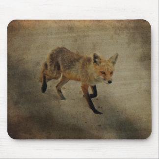 Vixen del Fox rojo - parque de estado de la playa  Tapetes De Ratón
