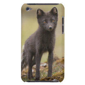 Vixen searches for food barely there iPod case