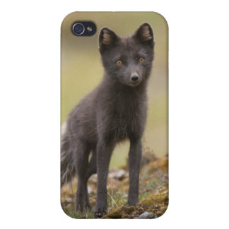 Vixen searches for food iPhone 4 cases