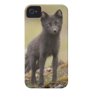 Vixen searches for food iPhone 4 cover