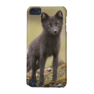 Vixen searches for food iPod touch (5th generation) cover