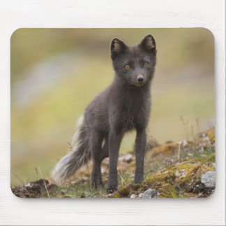 Vixen searches for food mouse pad