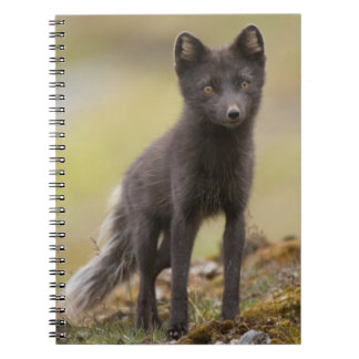 Vixen searches for food notebook