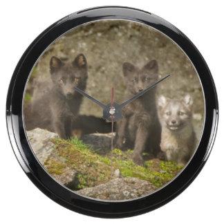 Vixen with kits outside their den aqua clock