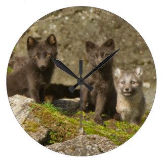 Vixen with kits outside their den wallclocks