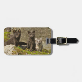 Vixen with kits outside their den luggage tags