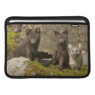 Vixen with kits outside their den MacBook air sleeve
