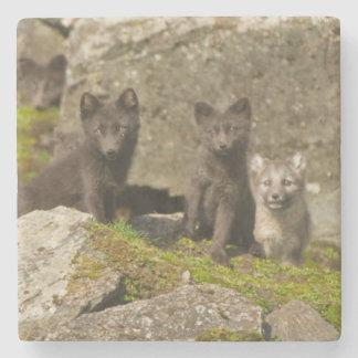 Vixen with kits outside their den stone beverage coaster