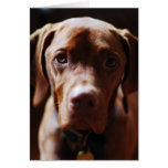 Vizsla - And they call it puppy love Greeting Card
