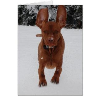 Vizsla - Do my ears look big? Card