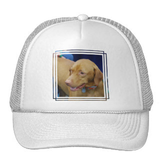 Vizsla Dog Baseball Hat