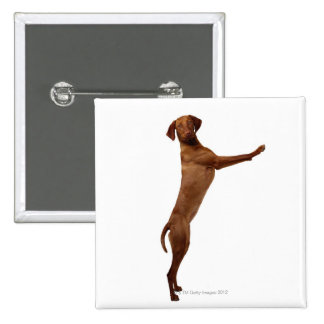 Vizsla Dog 2 Inch Square Button