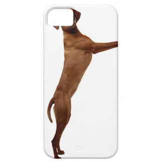 Vizsla Dog iPhone 5 Covers
