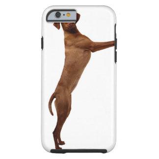 Vizsla Dog Tough iPhone 6 Case