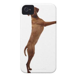 Vizsla Dog Case-Mate iPhone 4 Case