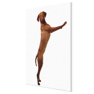 Vizsla Dog Gallery Wrapped Canvas