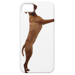 Vizsla Dog iPhone SE/5/5s Case