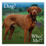 Vizsla - Dog?, Who?, Me?? Posters
