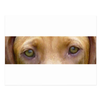 vizsla eyes.png postcard