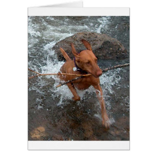Vizsla_fetching in water.png greeting card