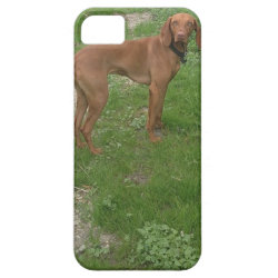 Case-Mate Vibe iPhone 5 Case with Vizsla Phone Cases design