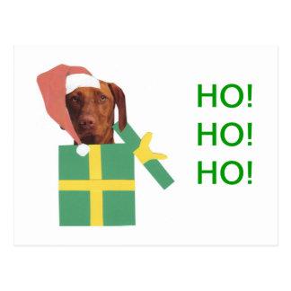 Vizsla Green Gift Box Postcard