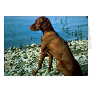 Vizsla Greeting Card