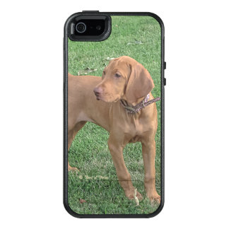 Vizsla iPhone 5 Case