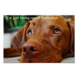 Vizsla - Just having one of those days Poster