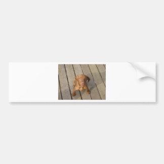 vizsla puppy bumper sticker