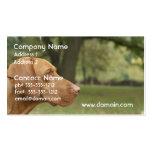 Vizsla Puppy Business Cards