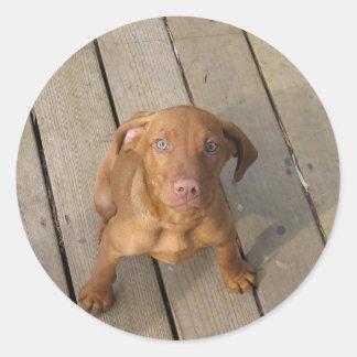 vizsla puppy classic round sticker