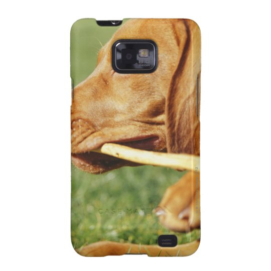 Vizsla puppy in park with stick in mouth, galaxy SII cover