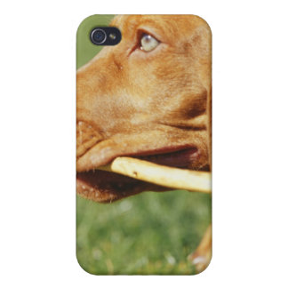 Vizsla puppy in park with stick in mouth, iPhone 4/4S cover