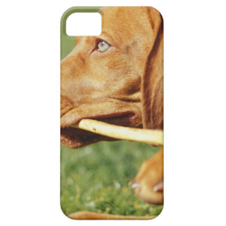 Vizsla puppy in park with stick in mouth, iPhone SE/5/5s case