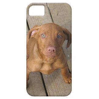 vizsla puppy iPhone SE/5/5s case