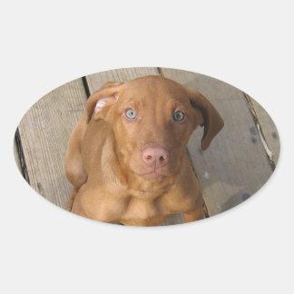 vizsla puppy oval sticker