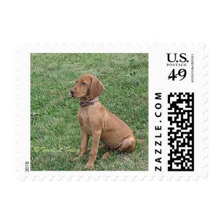 Vizsla Puppy Postage Stamp