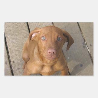 vizsla puppy rectangular sticker