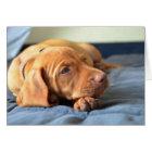 Vizsla Puppy Resting On Its Paw Card