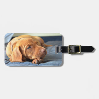 Vizsla Puppy Resting On Its Paw Luggage Tag