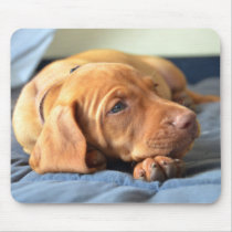 Vizsla Puppy Resting On Its Paw Mouse Pad