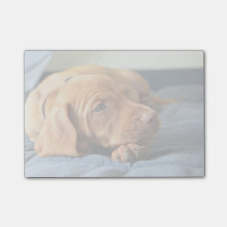 Vizsla Puppy Resting On Its Paw Post-it Notes