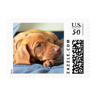 Vizsla Puppy Resting On Its Paw Postage