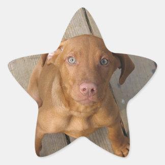 vizsla puppy star sticker
