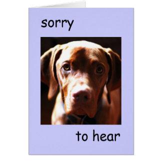Vizsla - sorry to hear you re pawly card